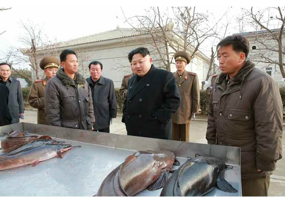 Kim Jong Un visits Samchong Catfish Farm, December, 6th, 2015 | Image: Rodong Sinmun