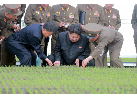 kim-jong-un-and-seedlings